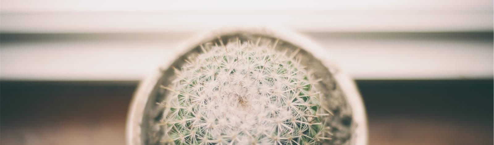 cactus - een netelige situatie